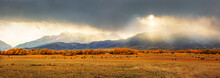 Autumn Panorama In Heber Valle...
