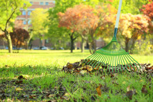 Cleaning Of Autumn Leaves In P...