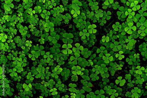 Canvas Print Green leaves pattern,leaf Shamrock or water clover background