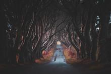 The Dark Hedges In Northern Ir...