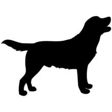 Schattenbild Von Einem Labrador, Isoliert Freigestellt Vor Weißem Hintergrund