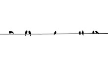 Silhouette Of Birds On A Wire, Many Bird Is On The Electric Cable, Birds Couple, Two Birds In Love