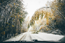 First Snow In The Autumn Forest Road. Tree Branch Blocking Road In Snow Storm. Danger Of Winter Driving.