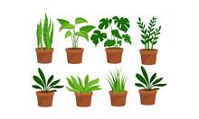 Green Home Plants In Pots Vector Illustration Set