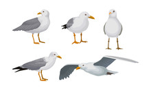 Grey Seagulls Stand In Different Poses And Fly Vector Illustraion Set