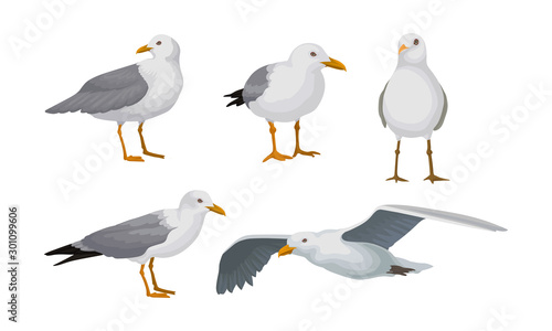 Obraz na plátně Grey Seagulls Stand In Different Poses And Fly Vector Illustraion Set