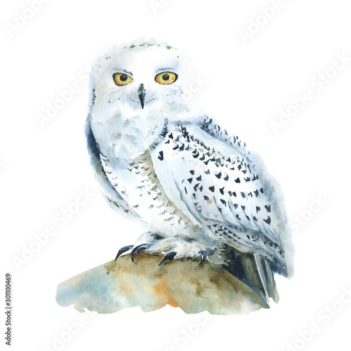 Watercolor white polar owl isolated, Arctic bird. North fauna Illustration. Poster, wall-art. Scandinavian style. Winter prints.