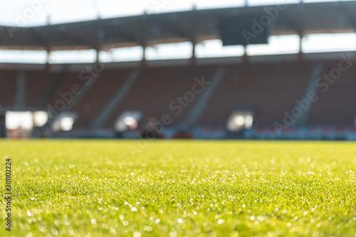 Wet grass at the football stadium Canvas Print
