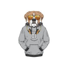Humanized Boxer Breed Dog Dressed Up In Modern City Outfits. Design For Dogs Lovers. Fashion Anthropomorphic Doggy Illustration. Animal Wear Hoodie, Headphones And Sunglasses. Hand Drawn Vector.
