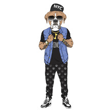 Humanized Boxer Breed Dog Dressed Up In Hip Hop Outfits. Design For Dogs Lovers. Fashion Anthropomorphic Doggy Illustration. Animal Wear Jeans Jacket, Jogging Pants, Cap, Sunglasses. Hand Drawn Vector