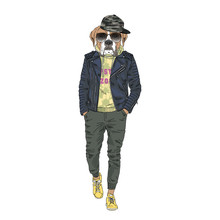 Humanized Boxer Breed Dog Dressed Up In Modern City Outfits. Design For Dogs Lovers. Fashion Anthropomorphic Doggy Illustration. Animal Wear Leather Jacket, Jogging Pants, Hoodie And Sunglasses. Hand