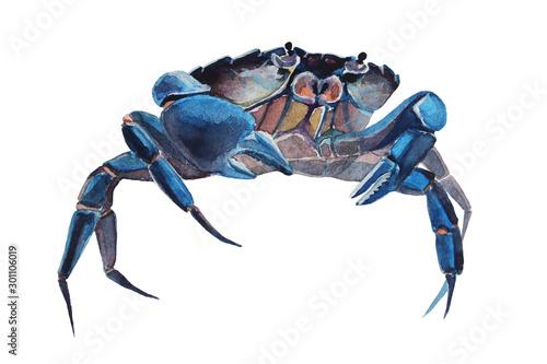Watercolor illustration of crab Wallpaper Mural