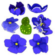 canvas print picture - the Violet flower of pansies.  illustration