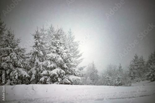 Snowy fir forest in winter mountains © erika8213