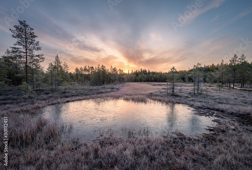 Obraz Calmness and cold autumn morning with frozen pond and sunrise in wetland Finland - fototapety do salonu