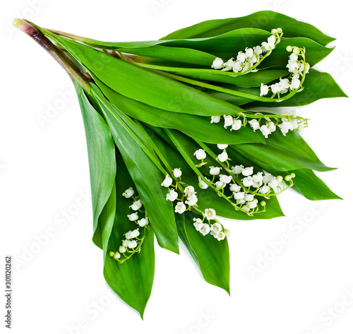 Poster Muguet de mai Lily of the valley or may bells flowers isolated on a white background.