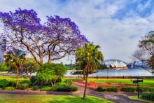Sy RBG Jacaranda Lawns Bay