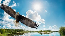 Bird, Eagle, Flying, Sky, Fly,...