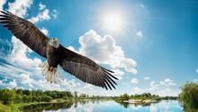 Bird, Eagle, Flying, Sky, Fly,...