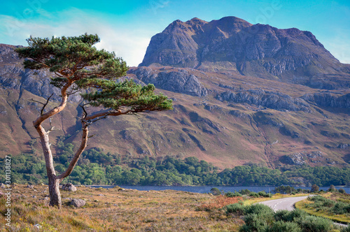 Fényképezés caledonian tree with siloch mountain in the scottish highlands