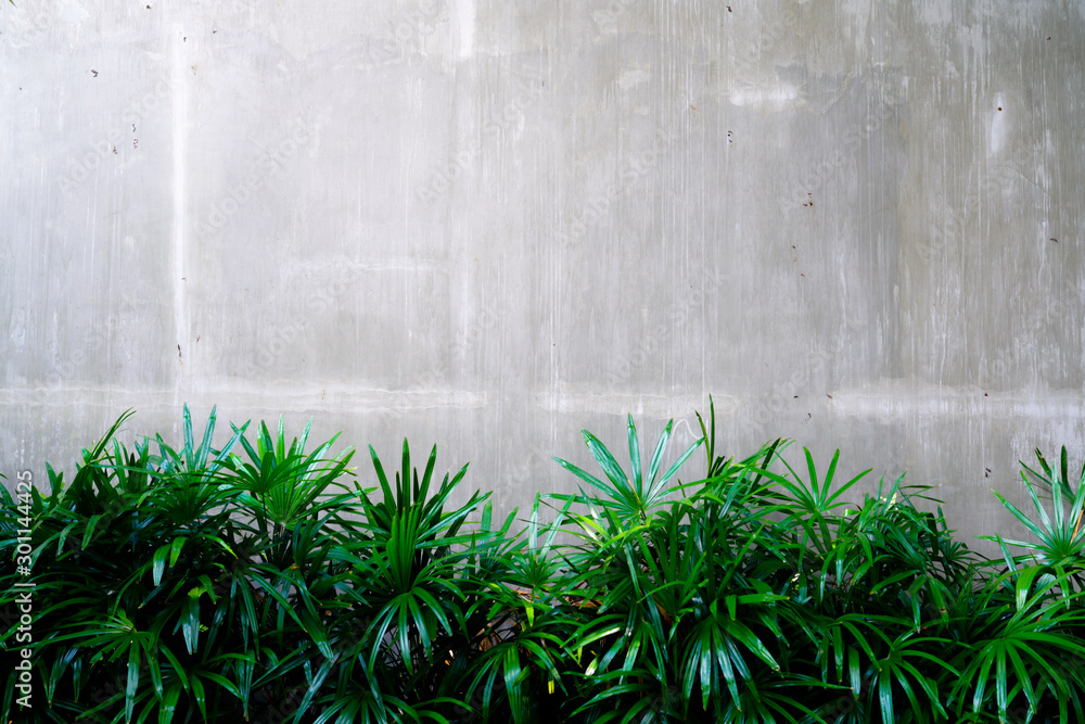 Cement wall with tree abstract background