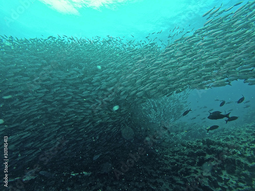 Just some fishes, Galapagos Islands
