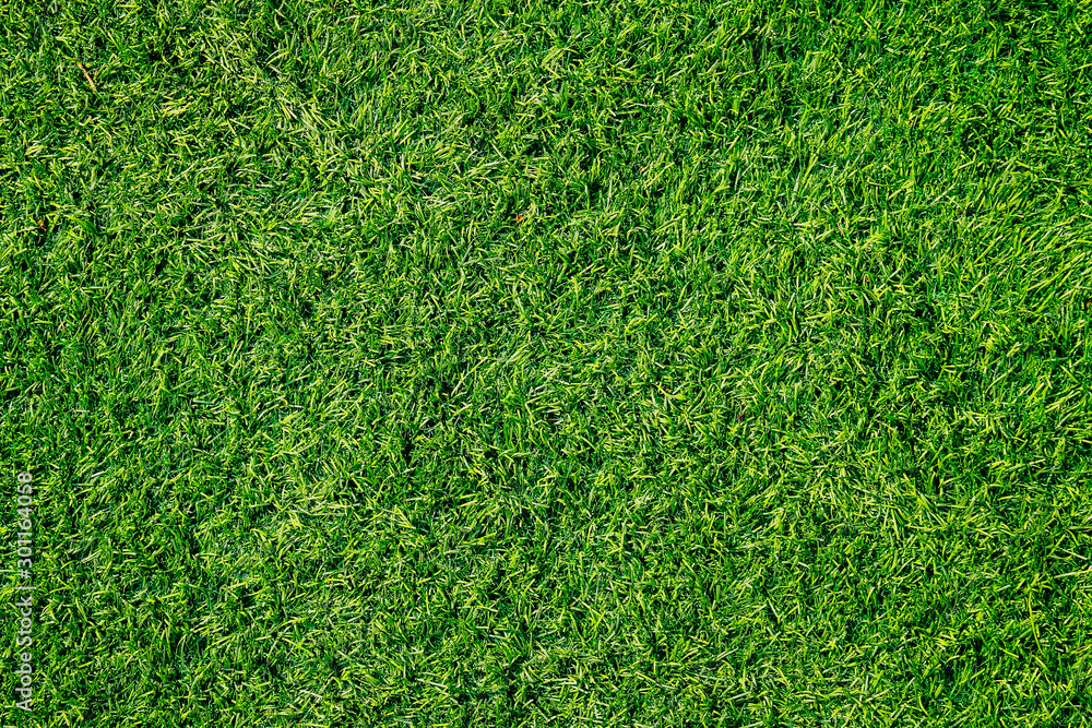 Fototapety, obrazy: Green grass texture can be use as background