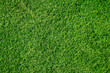 Green grass texture can be use as background
