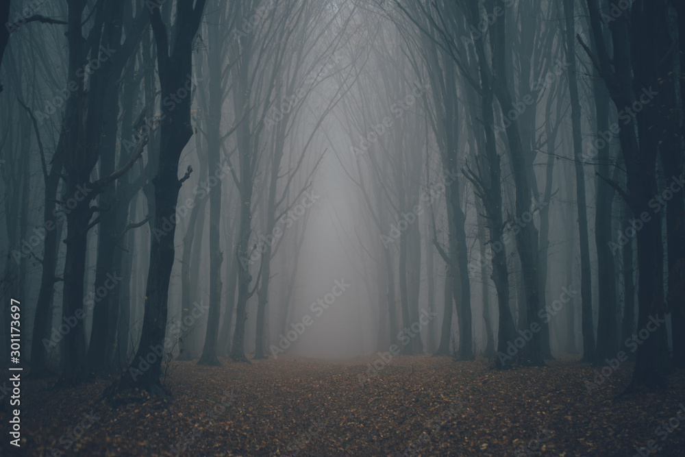 Fototapety, obrazy: Forest in fog with mist. Fairy spooky looking woods in a misty day. Cold foggy morning in horror forest with trees