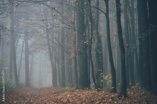 Photo Forest in fog with mist