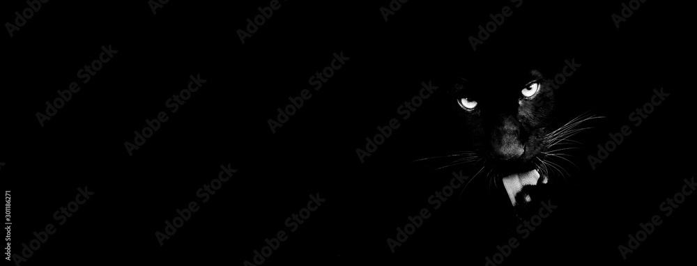 Fototapety, obrazy: Black panther with a black background
