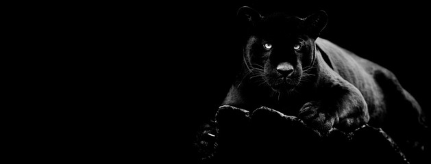 Fototapeta Zwierzęta Black jaguar with a black background