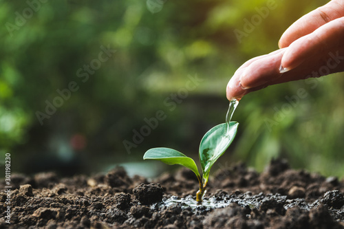 Fototapeta Hand of person watering young tree in the garden with sunshine on nature background