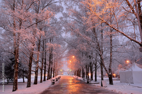 Foto op Aluminium Lavendel Beautiful urban alley with snowy trees and a path with benches under the light of lanterns