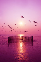 Beautiful Nature Landscape Sunset And Seagull Birds On The Beach.