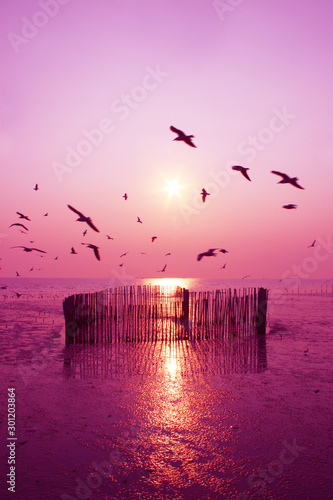 Foto auf Gartenposter Hochrote Beautiful nature landscape sunset and seagull birds on the beach.