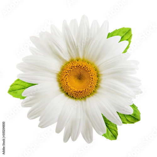 Fotografie, Obraz Chamomile or camomile flowers with mint leaves isolated on white background