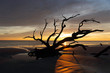 Sunrise at Driftwood Beach, Jekyll Island, Georgia USA is a popular spot for photography and relaxing in nature.
