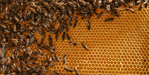 Foto auf AluDibond Bienen Natural lighting. Detailed view of honeycomb full of bees. Conception of apiculture