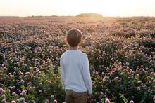 Boy Standing On A Clover Field