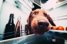 Neugieriger Hund Steckt Die Nase In Den Kühlschrank