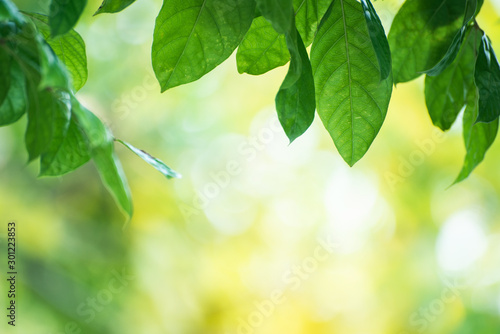 Poster Jaune de seuffre Closeup nature view of green leaf on blurred greenery background in garden with copy space using as background natural green plants landscape, ecology, fresh wallpaper concept.