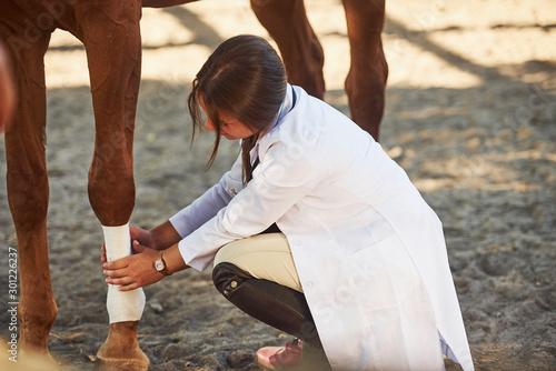 Using bandage to heal the leg. Female vet examining horse outdoors at the far...