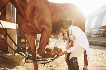 Using bandage to heal the leg. Female vet examining horse outdoors at the farm at daytime