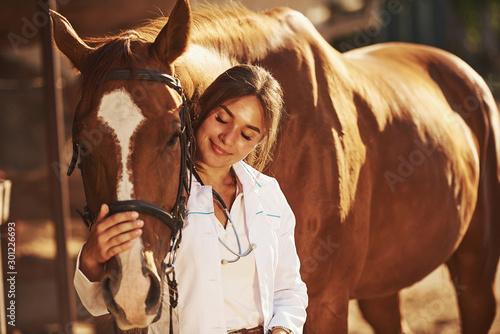 plakat Beautiful sunlight. Female vet examining horse outdoors at the farm at daytime