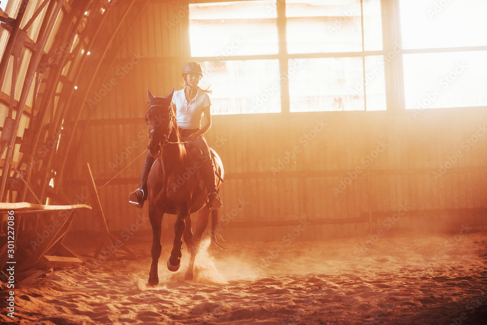 Fototapety, obrazy: Majestic image of horse silhouette with rider on sunset background. The girl jockey on the back of a stallion rides in a hangar on a farm
