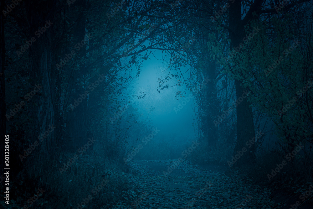 Fototapety, obrazy: Mysterious, blue-toned forest pathway. Footpath in the dark, foggy, autumnal, cold forest among high trees.