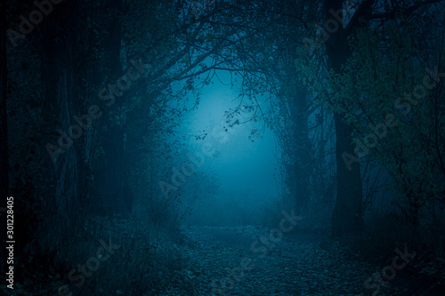 fototapeta na ścianę Mysterious, blue-toned forest pathway. Footpath in the dark, foggy, autumnal, cold forest among high trees.