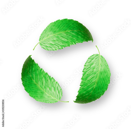 Green leaves in a circular motion on a white background