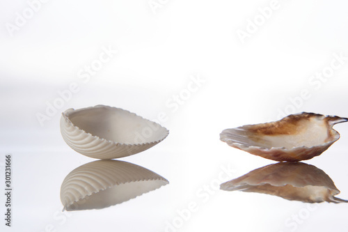Fotografering  Seashell and reflection in glass on a white background